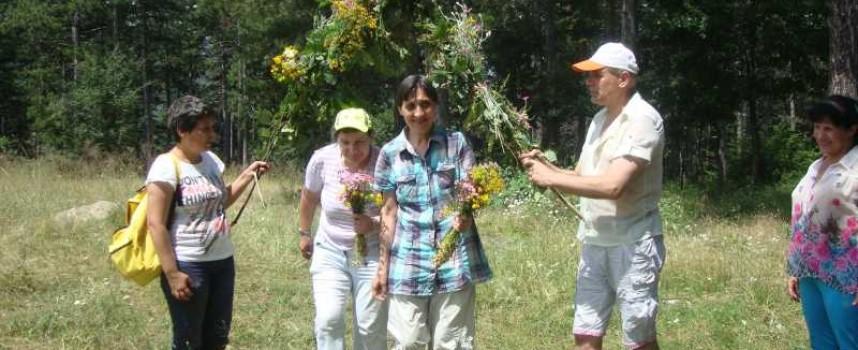 Човеколюбци браха билки край Белово