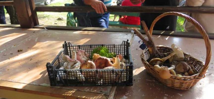 Гъбарите се събират на Атолука през този уикенд