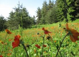 Синоптиците: Топло и слънчево ще бъде през почивните дни