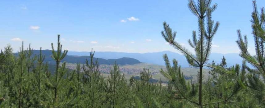 Сесията за отмяната на решението за гората на Црънча ще е в понеделник