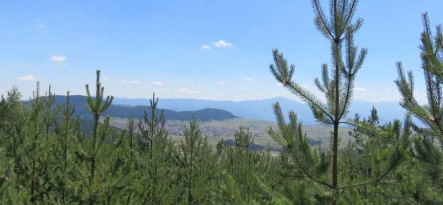 Црънча благодари на Делян Пеевски, иска публичен статут на гората