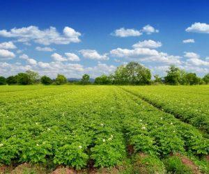 Обединени земеделци предлагат мерки за подкрепа на земеделските производители и местната власт