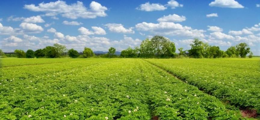 Земеделците победиха: Облекчават процедурата по еднодневните трудови договори