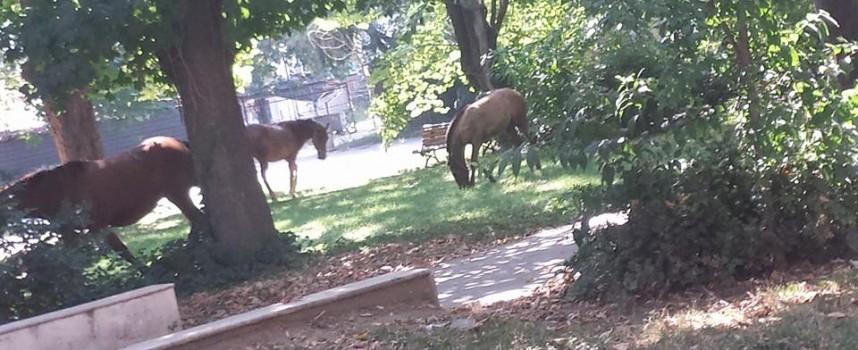 Агенцията по храните тръгна по следите на мъртвите коне в Панагюрски колонии