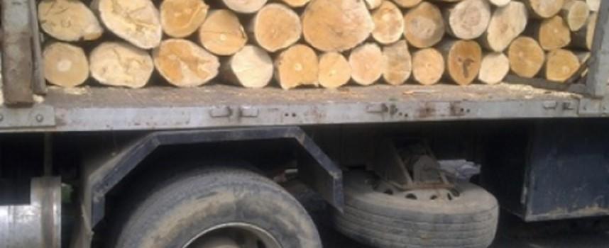 Спипаха 13 кубика бял бор и смърч возени с камион без табели край Сърница