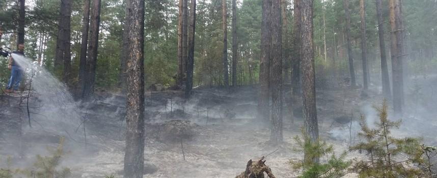 Пожарникари, горски и граждани спасиха гората край Абланица от пожар