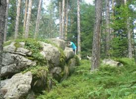 Подписка срещу изсичането на гората тече на Атолука
