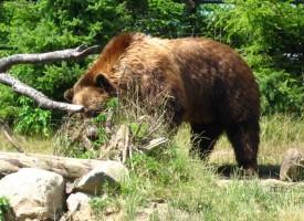 Пчелари от Велинград и Нова махала се сдобиха с електропастири срещу мечки