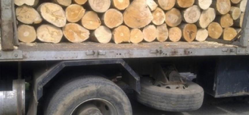 Ракитово: Горски изгоряха за 10 кубика букови дърва, извозени незаконно