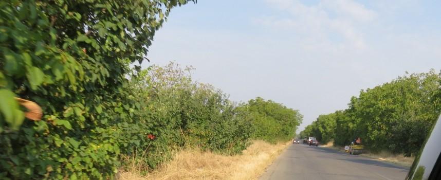 Ремонтират пътя от разклон Юнаците до Бошуля, в една лента и край Поибрене