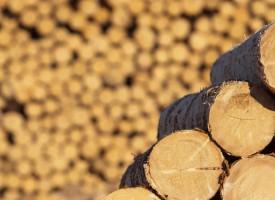 Иззеха незаконни дърва от панагюрец