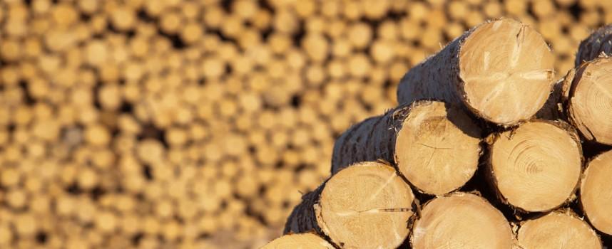 Спипаха незаконни дърва в Поибрене и Кръстава