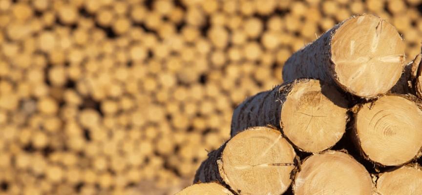 Двама влачат незаконни дърва край Велинград, взеха им ги