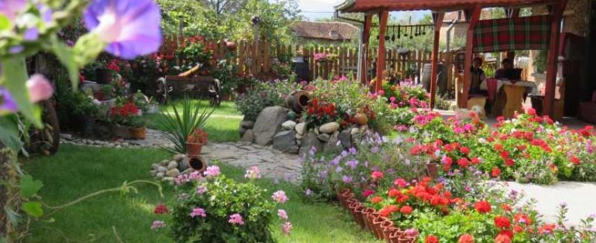 Райска градина по гроздобер в Бошуля