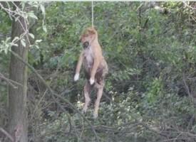 Двама ще отговарят за убийството на кучето в Оборище