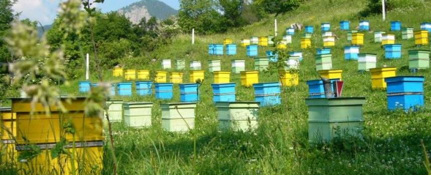 Утре: Пчеларите в Калугерово, Лесичово и Боримечково да пазят пчелите от изгрев до 10 ч.
