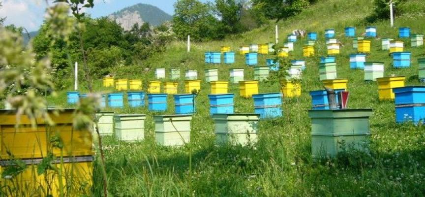 Намалява се административната тежест при регистрацията на пчелини