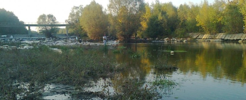 Мъртвата рибата в Марица при Огняново е заради сезонното маловодие