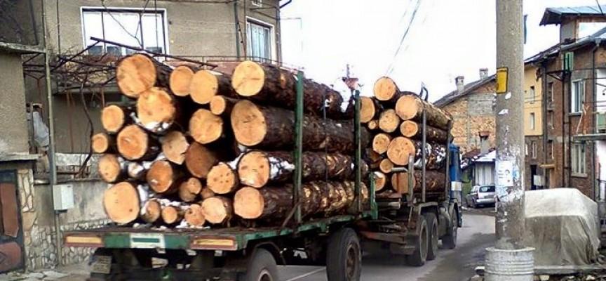 Спипаха незаконна дървесина между Бозьова и Медени поляни