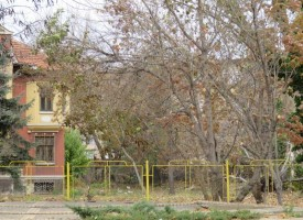Вятър събори голямо дърво в Дома на учителя