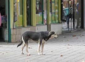 """В Пазарджик: Бездомните кучета поздравявали с """"Густо, майна"""""""