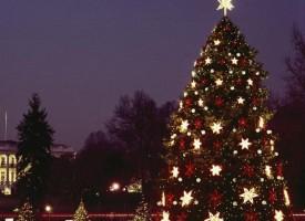 Тази вечер: Надежда Казакова пали светлините на градската елха в Брацигово
