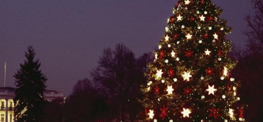 На 12 декември: Букет от звезди ще пее край Коледната елха в Пещера, вижте програмата