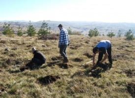 УТРЕ: Пазарджик ще стане още по-зелен, засаждаме още 2001 дървета