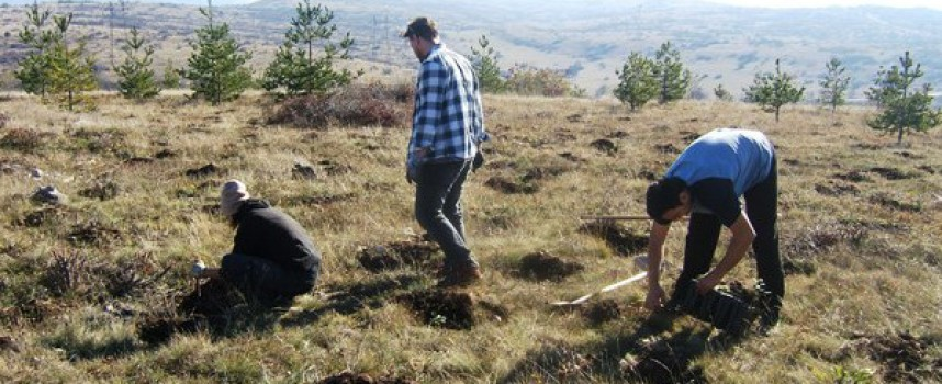 В неделя: 500 дъба садят край Писковец