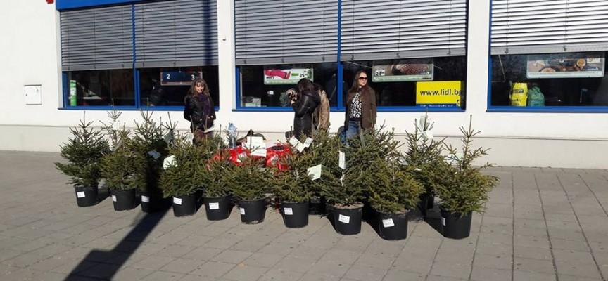 Горското продава живи елхи пред Лидл