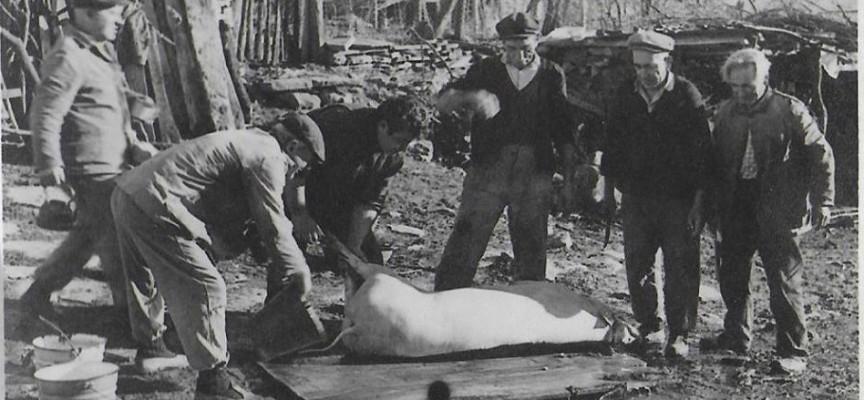 Свинските погребения, ей тия дни, по Коледа