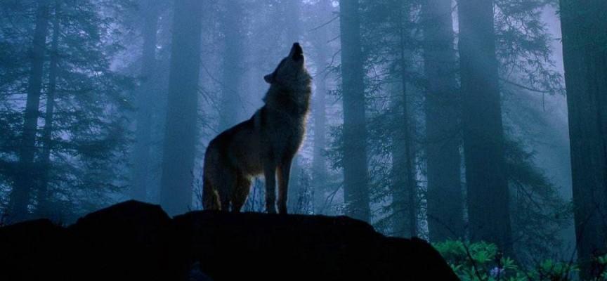 Вдигни очи: Първото пълнолуние за годината е в небето, наричат го Вълча луна
