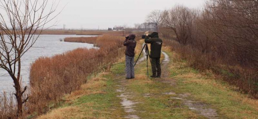 От утре до неделя: Броят зимуващите водолюбиви птици край Бошуля, Звъничево и по Тополница