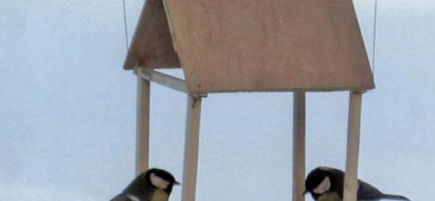 Нахранете птичките, трудно е да си намерят зрънца в снега, вижте идеи