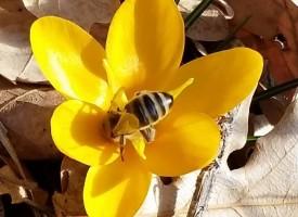 Община Панагюрище насърчава интереса към пчеларството с детски конкурс