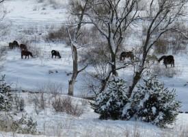 За утре: Студ на кутийки и сняг на филийки
