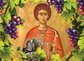 Църквата почита днес свети Трифон