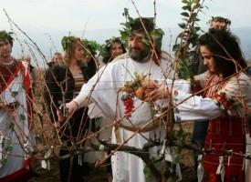 НСИ: Над 700 агрономи и технолози – винари завършват годишно висшите училища