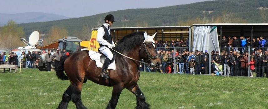 Силните коне отново ще препускат в Калугерово на Тодоровден