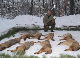 В Попинци: Авджии гонят чакали и лисици, нападат фермите им