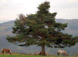 1300 дървета край Пазарджик, Пловдив и Асеновград садим идната събота