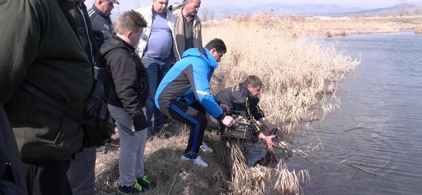 6000 шаранчета и 10 000 каленика във водоемите край Марица