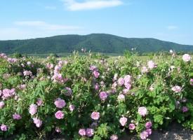 С хоро върху розите премина протестът в Бяга