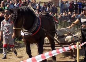Стрелча: Ето кой спечели състезанието по конни надбягвания