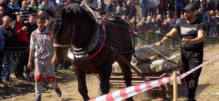 Надбягване на впрегнати коне и полети на гълъби бележат празника на ромите