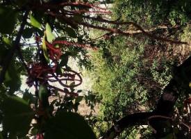 """Акция """"Освободи дърво от мартеница"""" стартираха природолюбители"""