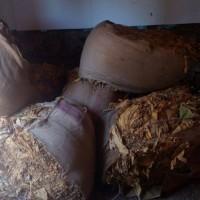 40 кг. сух тютюн прибраха от 24-годишна в Ракитово