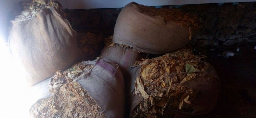Иззеха 1.5 кг тютюн без бандерол в Динката