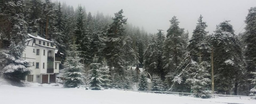 Сняг захлупи сините минзухари на Атолука