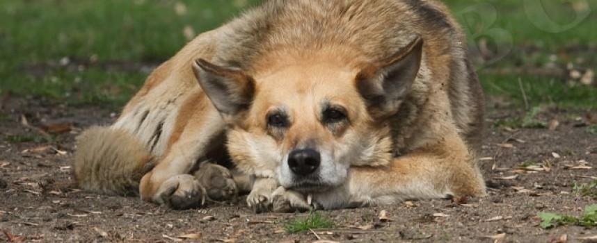Общината, ветеринарна клиника и природолюбители с акция за кастрация на бездомни кучета